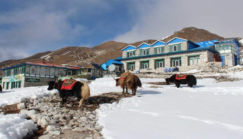 yak in jomsom