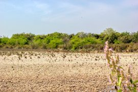 Deers at Bardiya National Park Tour