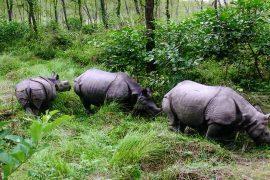 Jungle safari in Nepal - Chitwan