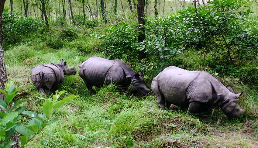 Jungle safari in Nepal - Chitwan