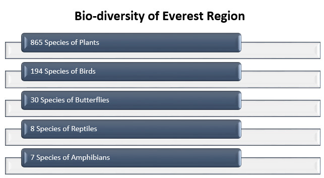 Biodiversity-of-everest-region